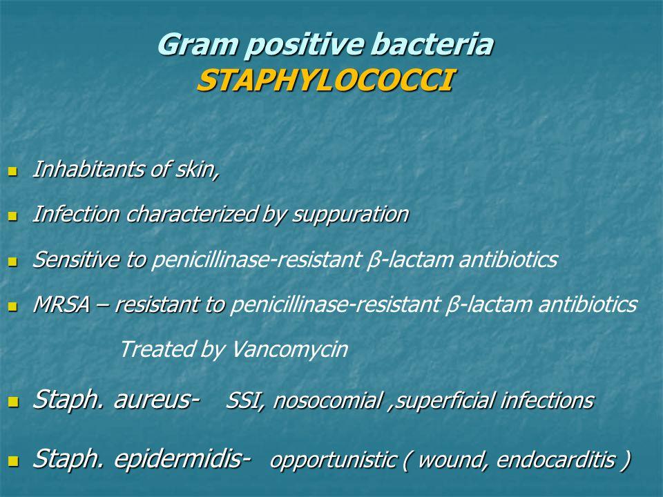 Gram positive bacteria STAPHYLOCOCCI Inhabitants of skin, Inhabitants of skin, Infection characterized by suppuration Infection characterized by suppu