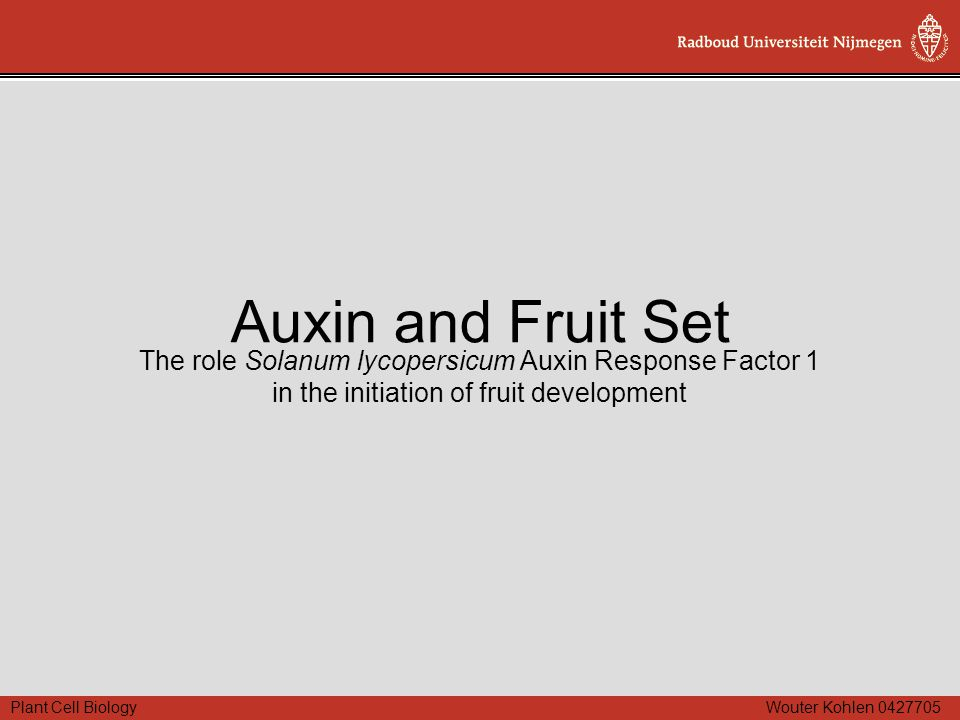 Plant Cell Biology Wouter Kohlen 0427705 Auxin and Fruit Set The role Solanum lycopersicum Auxin Response Factor 1 in the initiation of fruit developm