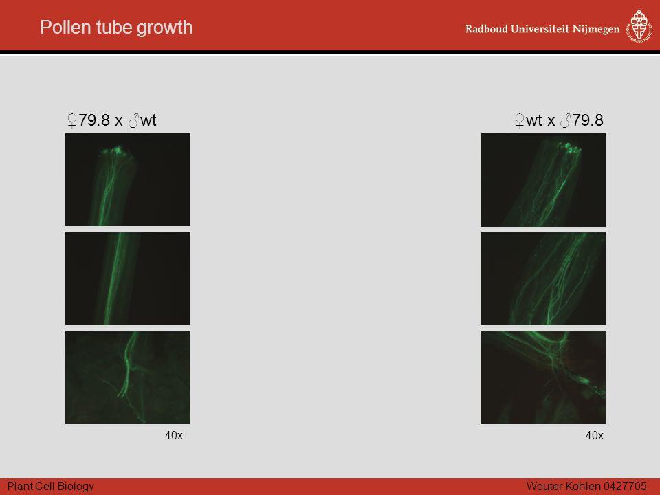 Plant Cell Biology Wouter Kohlen 0427705 Pollen tube growth 40x ♀79.8 x ♂wt 40x ♀wt x ♂79.8