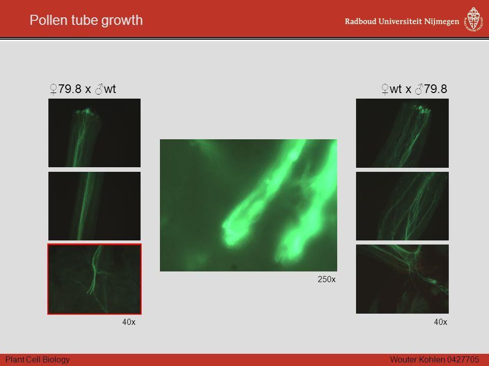 Plant Cell Biology Wouter Kohlen 0427705 Pollen tube growth 250x 40x ♀79.8 x ♂wt 40x ♀wt x ♂79.8