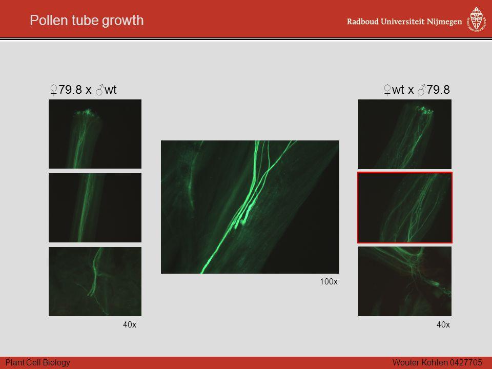 Plant Cell Biology Wouter Kohlen 0427705 Pollen tube growth 100x 40x ♀79.8 x ♂wt 40x ♀wt x ♂79.8