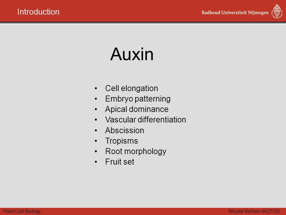 Plant Cell Biology Wouter Kohlen 0427705 Auxin Cell elongation Embryo patterning Apical dominance Vascular differentiation Abscission Tropisms Root mo
