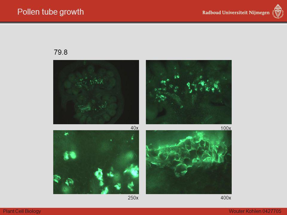 Plant Cell Biology Wouter Kohlen 0427705 Pollen tube growth 40x 100x 250x400x 79.8