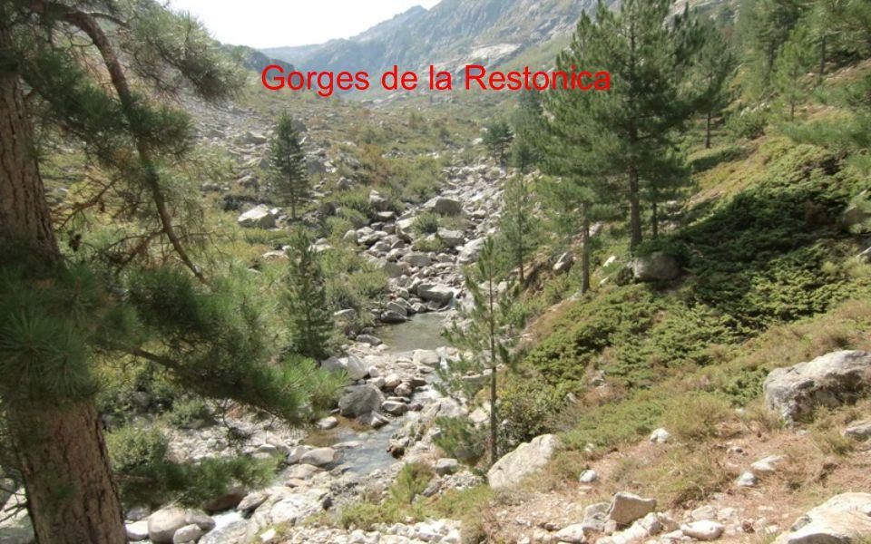 Údolí Restonica
