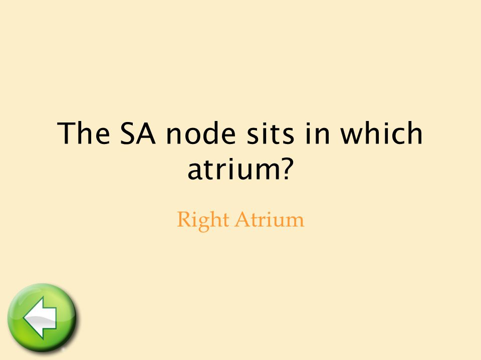 The SA node sits in which atrium? Right Atrium