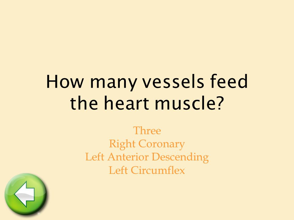 How many vessels feed the heart muscle? Three Right Coronary Left Anterior Descending Left Circumflex