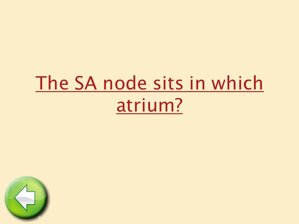 The SA node sits in which atrium?