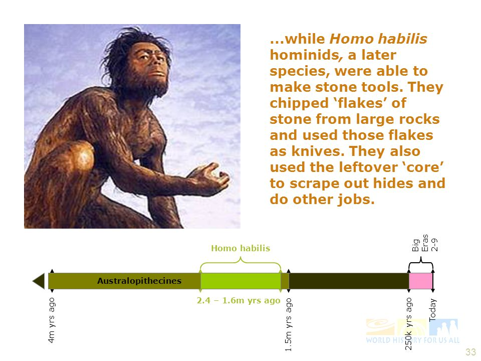 32 4 – 1.5m yrs ago Australopithecines 7m yrs ago First Hominids 250k yrs ago Today The first hominids had brains about the size of a modern chimp's.
