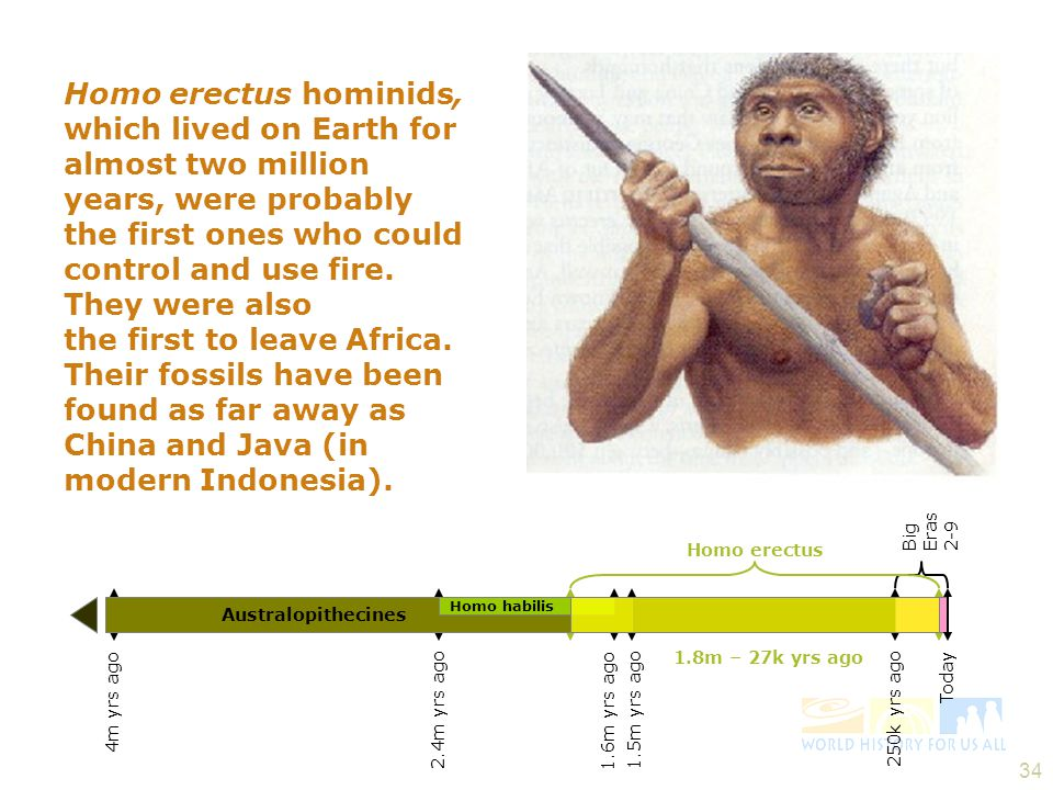 33 Homo habilis 2.4 – 1.6m yrs ago 250k yrs ago Today 4m yrs ago Australopithecines 1.5m yrs ago Big Eras 2-9...while Homo habilis hominids, a later species, were able to make stone tools.