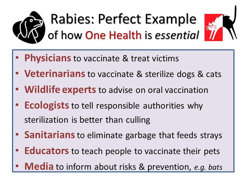 Rabies: Perfect Example of how One Health is essential Physicians to vaccinate & treat victims Veterinarians to vaccinate & sterilize dogs & cats Wildlife experts to advise on oral vaccination Ecologists to tell responsible authorities why sterilization is better than culling Sanitarians to eliminate garbage that feeds strays Educators to teach people to vaccinate their pets Media to inform about risks & prevention, e.g.