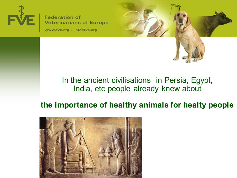 3 October 2007 In the ancient civilisations in Persia, Egypt, India, etc people already knew about the importance of healthy animals for healty people