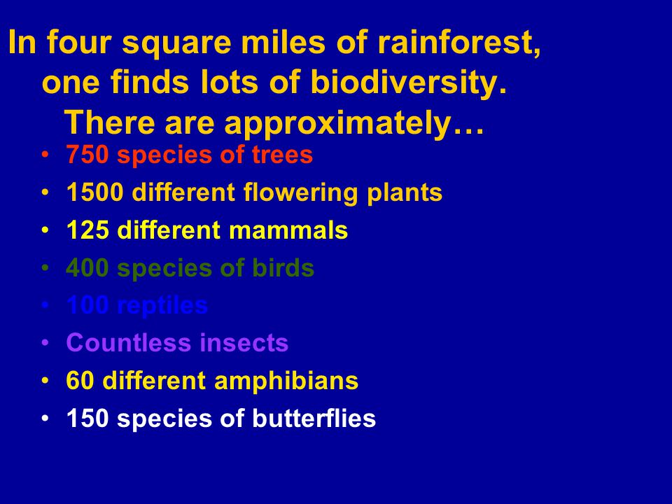 In four square miles of rainforest, one finds lots of biodiversity.