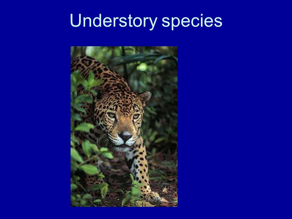 Understory species