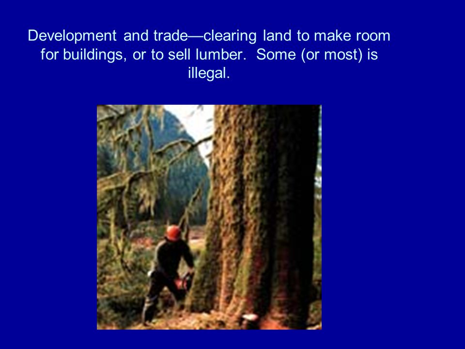 Development and trade—clearing land to make room for buildings, or to sell lumber.