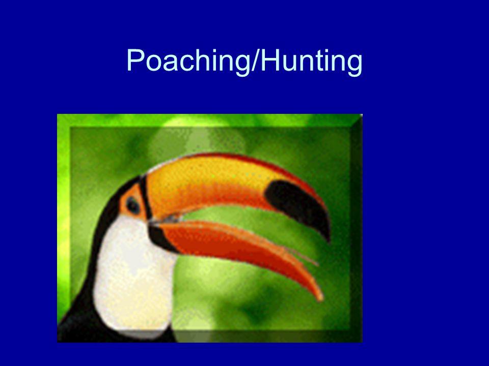 Poaching/Hunting