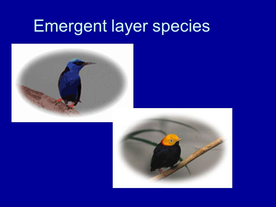 Emergent layer species