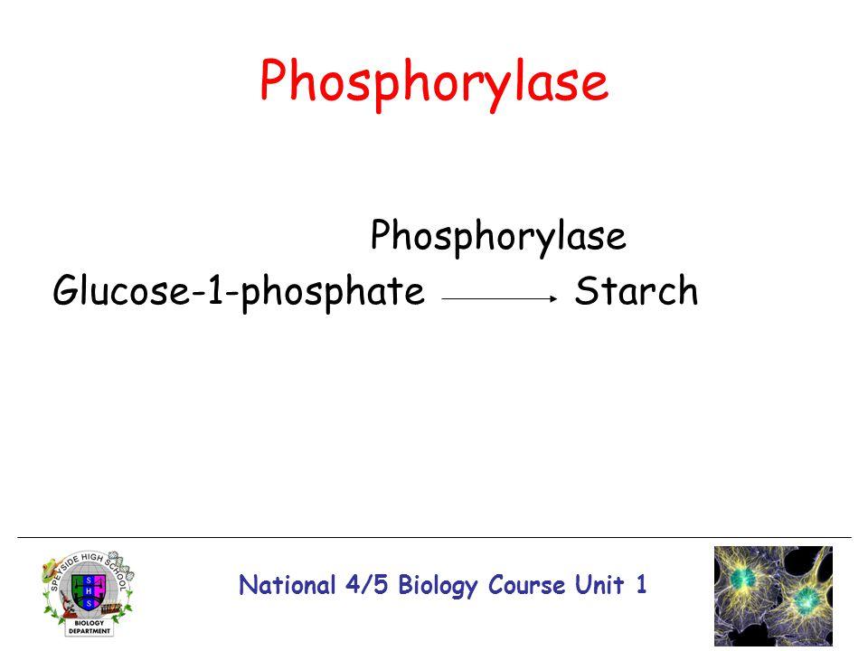 National 4/5 Biology Course Unit 1 Phosphorylase Glucose-1-phosphateStarch