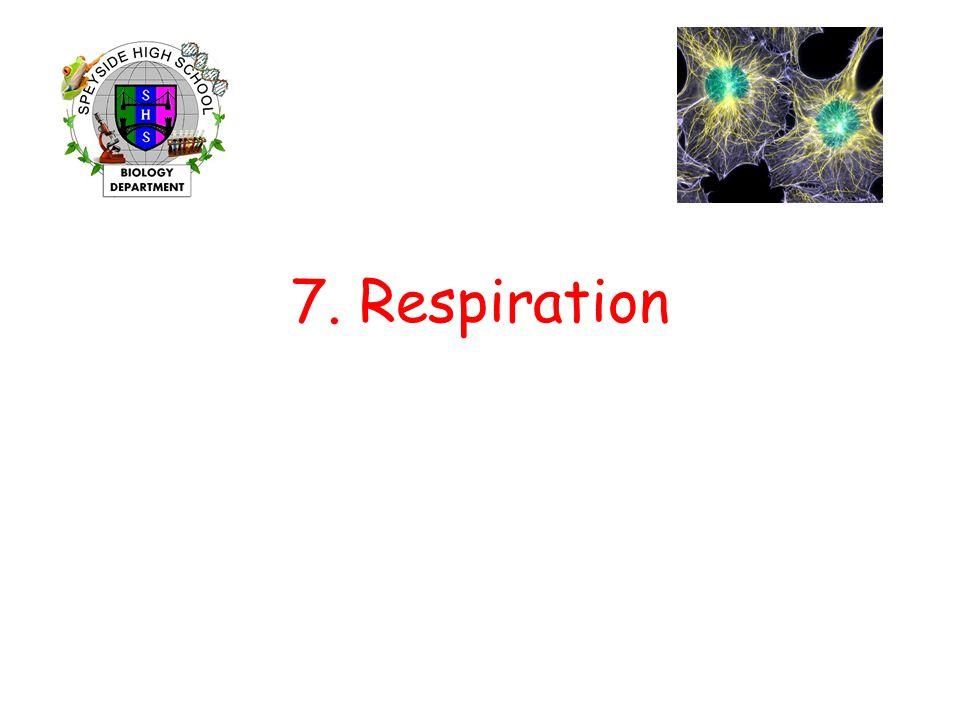 7. Respiration