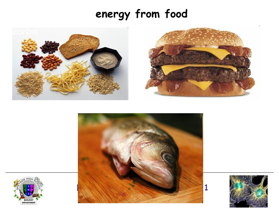 National 4/5 Biology Course Unit 1 energy from food