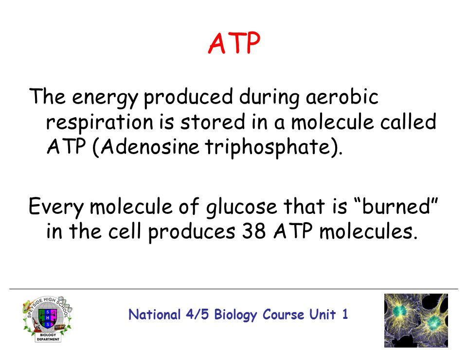 National 4/5 Biology Course Unit 1 ATP The energy produced during aerobic respiration is stored in a molecule called ATP (Adenosine triphosphate). Eve