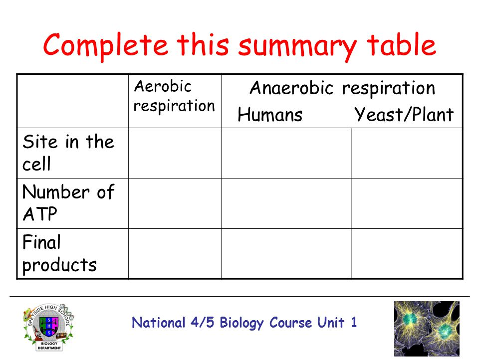 National 4/5 Biology Course Unit 1 Complete this summary table Aerobic respiration Anaerobic respiration Humans Yeast/Plant Site in the cell Number of