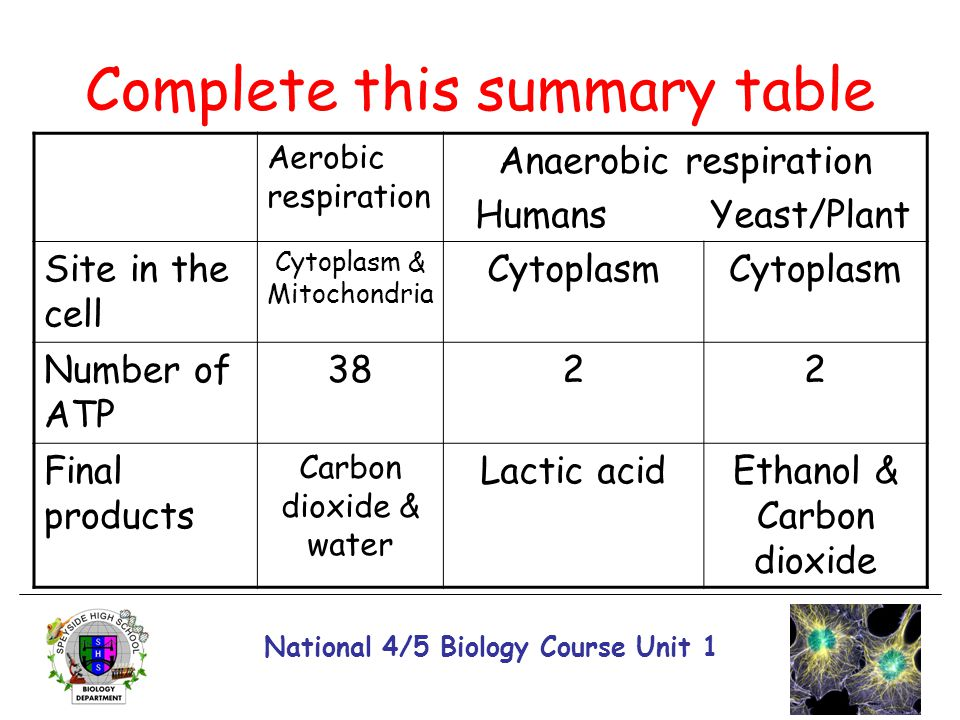 National 4/5 Biology Course Unit 1 Complete this summary table Aerobic respiration Anaerobic respiration Humans Yeast/Plant Site in the cell Cytoplasm