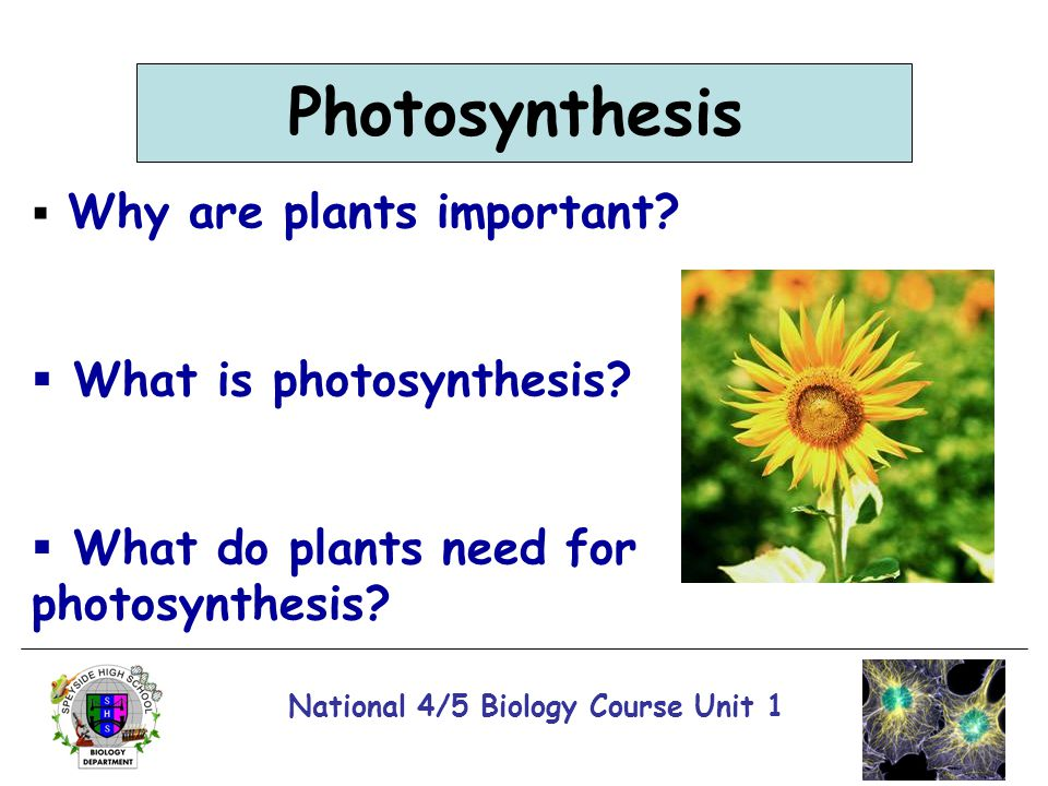 National 4/5 Biology Course Unit 1 Photosynthesis  Why are plants important?  What is photosynthesis?  What do plants need for photosynthesis?