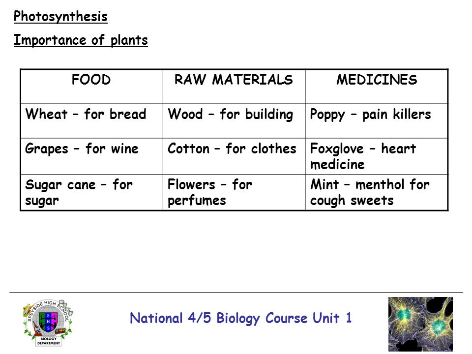 National 4/5 Biology Course Unit 1 Photosynthesis Importance of plants FOODRAW MATERIALSMEDICINES Wheat – for breadWood – for buildingPoppy – pain kil