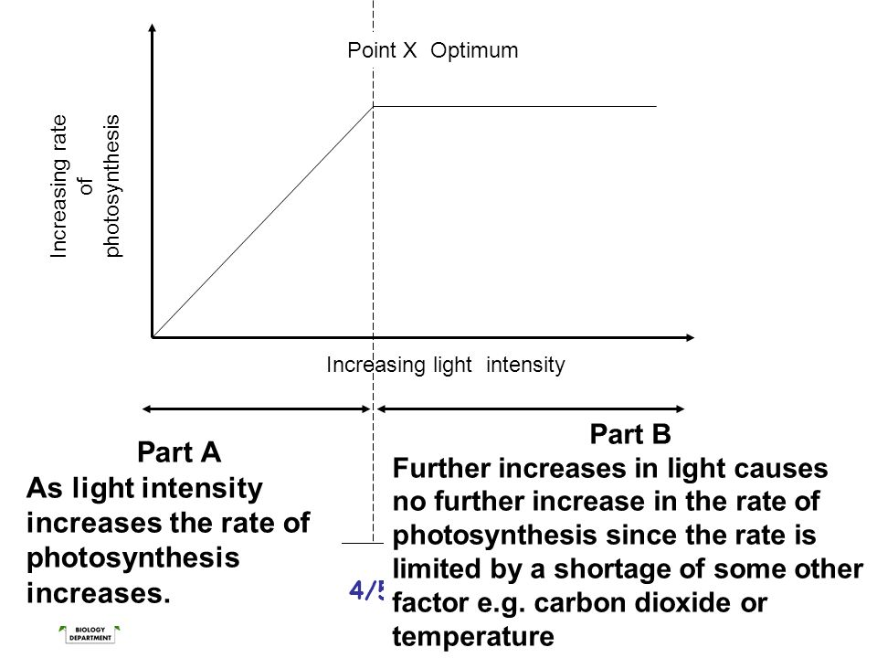 National 4/5 Biology Course Unit 1 Increasing rate of photosynthesis Increasing light intensity Part A As light intensity increases the rate of photos