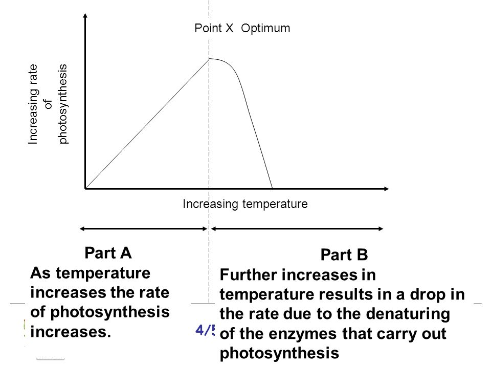 National 4/5 Biology Course Unit 1 Increasing rate of photosynthesis Increasing temperature Part A As temperature increases the rate of photosynthesis