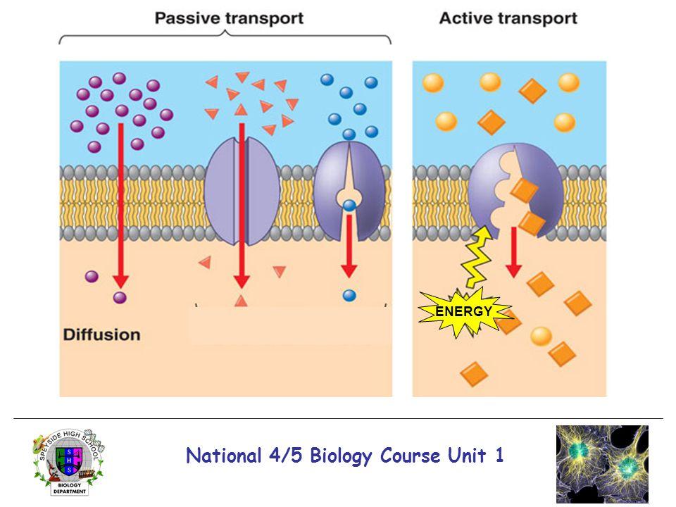 National 4/5 Biology Course Unit 1 ENERGY