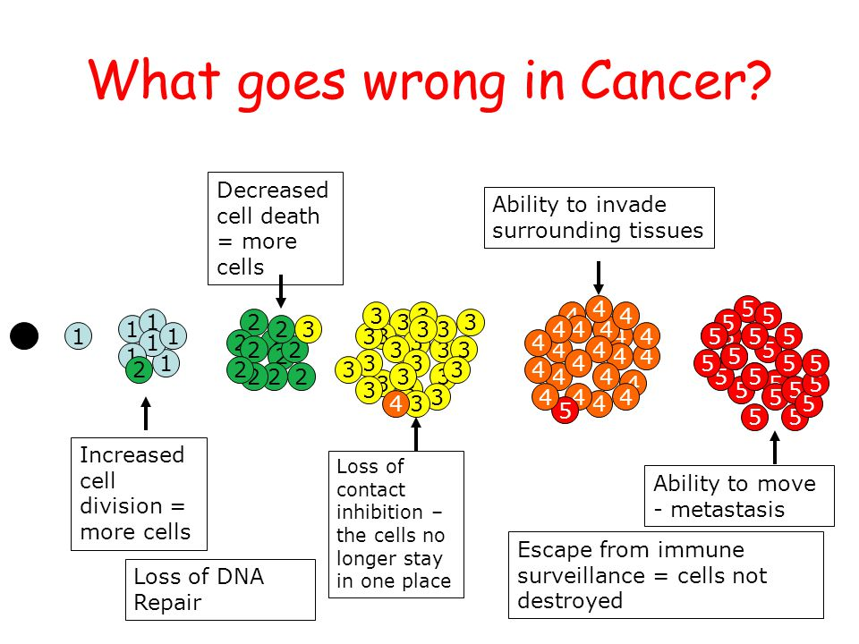 National 4/5 Biology Course Unit 1 What goes wrong in Cancer? 1 1 1 1 1 1 1 2 2 2 2 2 2 22 2 2 2 2 3 3 3 3 3 3 3 3 3 3 3 3 3 3 3 3 3 3 3 3 3 3 3 3 4 4