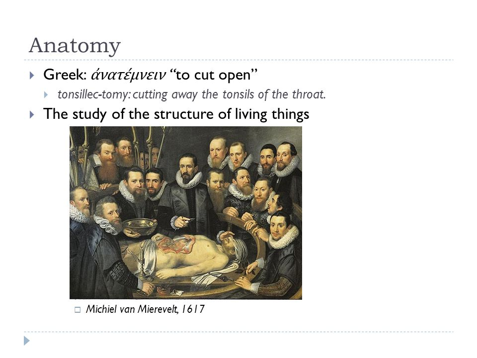 Anatomy  Greek: ἀνατέμνειν to cut open  tonsillec-tomy: cutting away the tonsils of the throat.