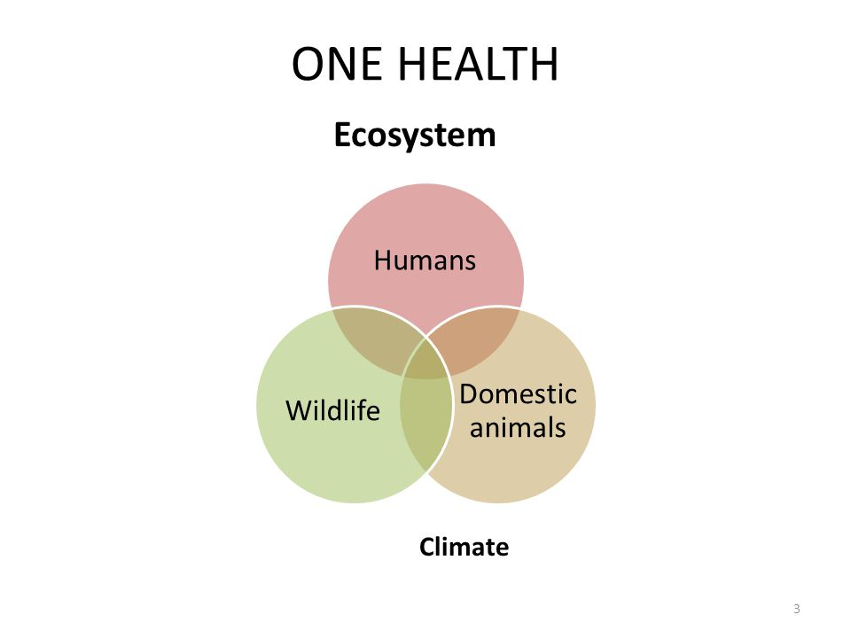 ONE HEALTH Ecosystem Climate Humans Domestic animals Wildlife 3