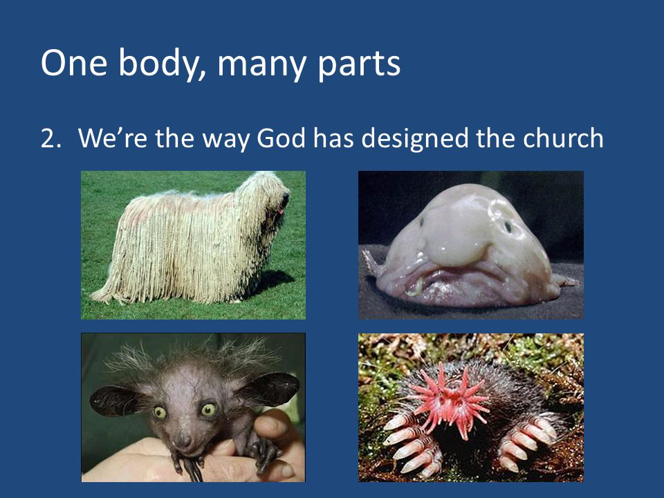 One body, many parts 2.We're the way God has designed the church