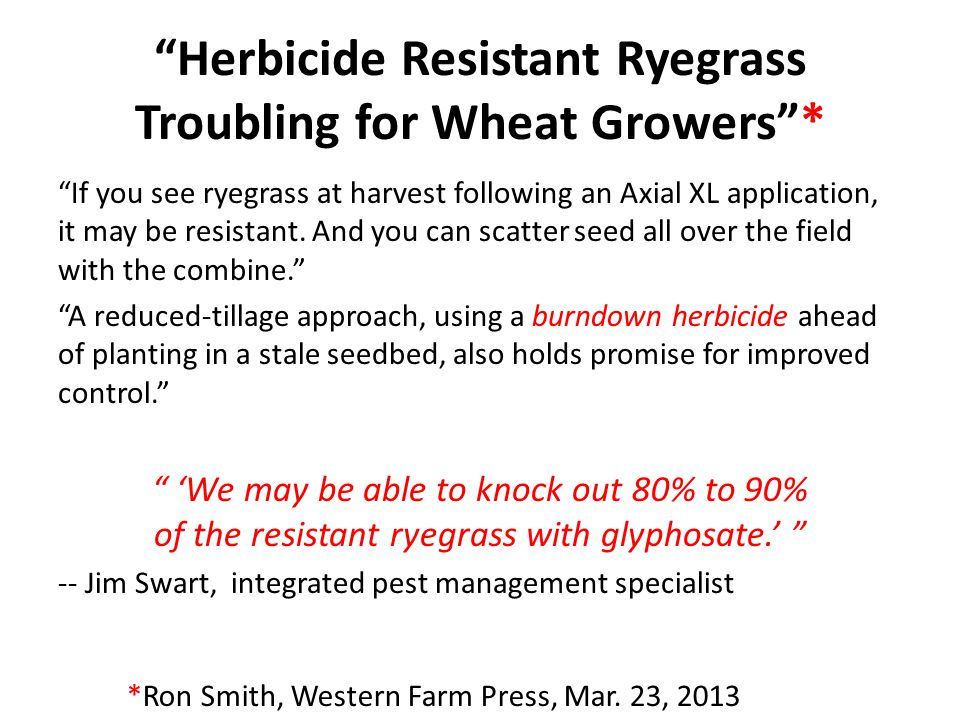 """""""Herbicide Resistant Ryegrass Troubling for Wheat Growers""""* """"If you see ryegrass at harvest following an Axial XL application, it may be resistant. An"""