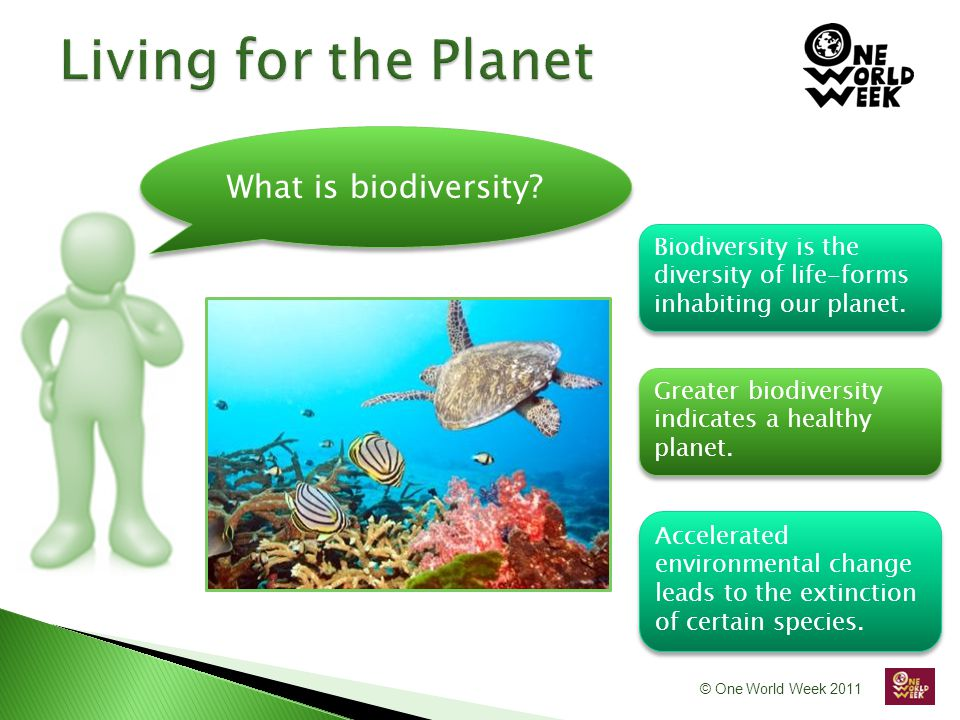 © One World Week 2011 What is biodiversity.
