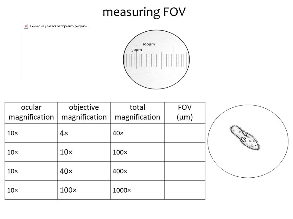 measuring FOV ocular magnification objective magnification total magnification FOV (μm) 10× 4× 40× 10× 100× 10× 40× 400× 10× 100× 1000×