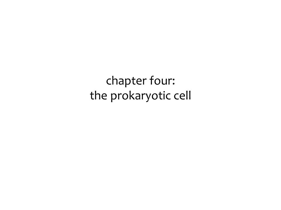 chapter four: the prokaryotic cell