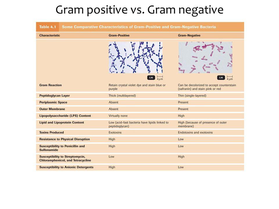 Gram positive vs. Gram negative