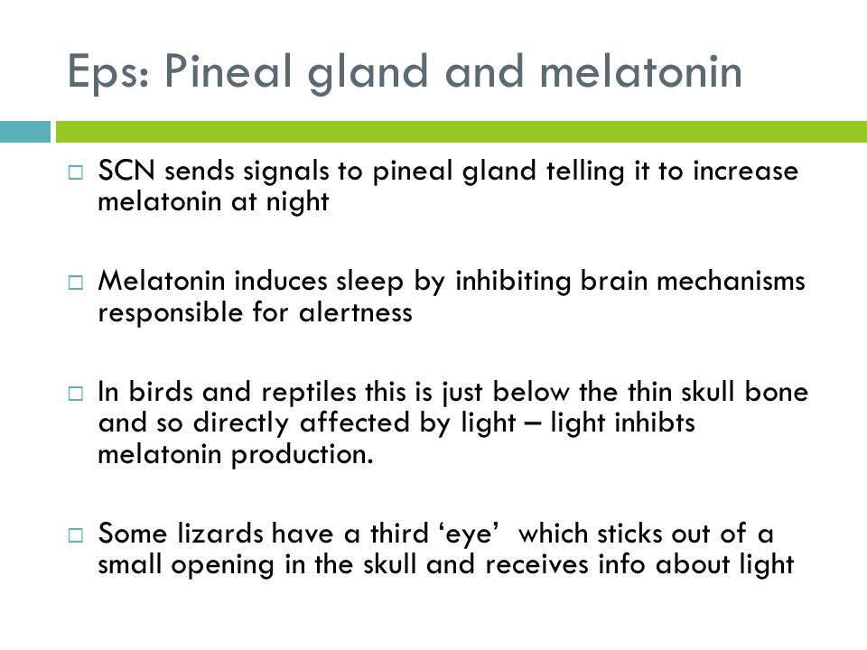 Eps: Pineal gland and melatonin  SCN sends signals to pineal gland telling it to increase melatonin at night  Melatonin induces sleep by inhibiting