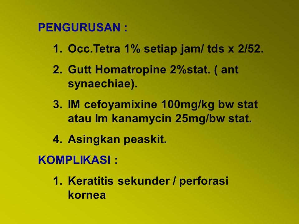 PENGURUSAN : 1.Occ.Tetra 1% setiap jam/ tds x 2/52. 2.Gutt Homatropine 2%stat. ( ant synaechiae). 3.IM cefoyamixine 100mg/kg bw stat atau Im kanamycin