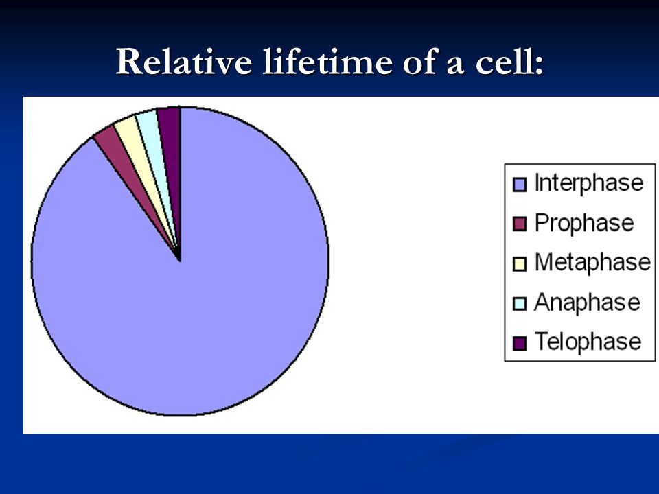 Events of Interphase: Cell is growing in size Cell is growing in size Proteins,organelles, and nucleic acids are produced Proteins,organelles, and nucleic acids are produced Majority of a cell's life Majority of a cell's life Prepares for mitosis Prepares for mitosis Chromosomes and centrioles replicate.