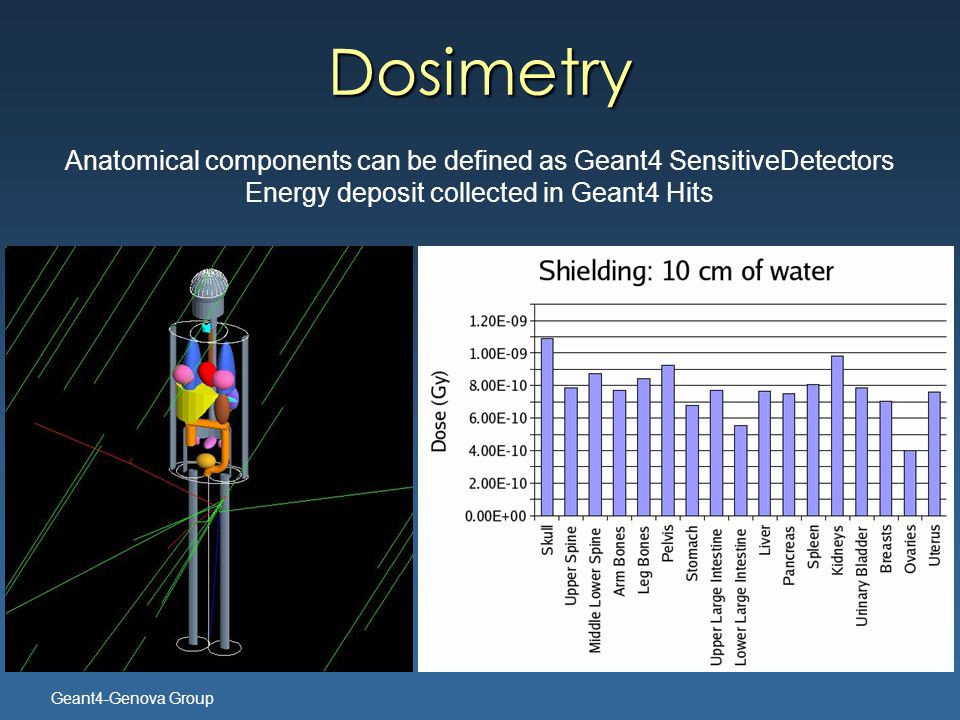 Geant4-Genova Group Anatomical components can be defined as Geant4 SensitiveDetectors Energy deposit collected in Geant4 Hits Dosimetry