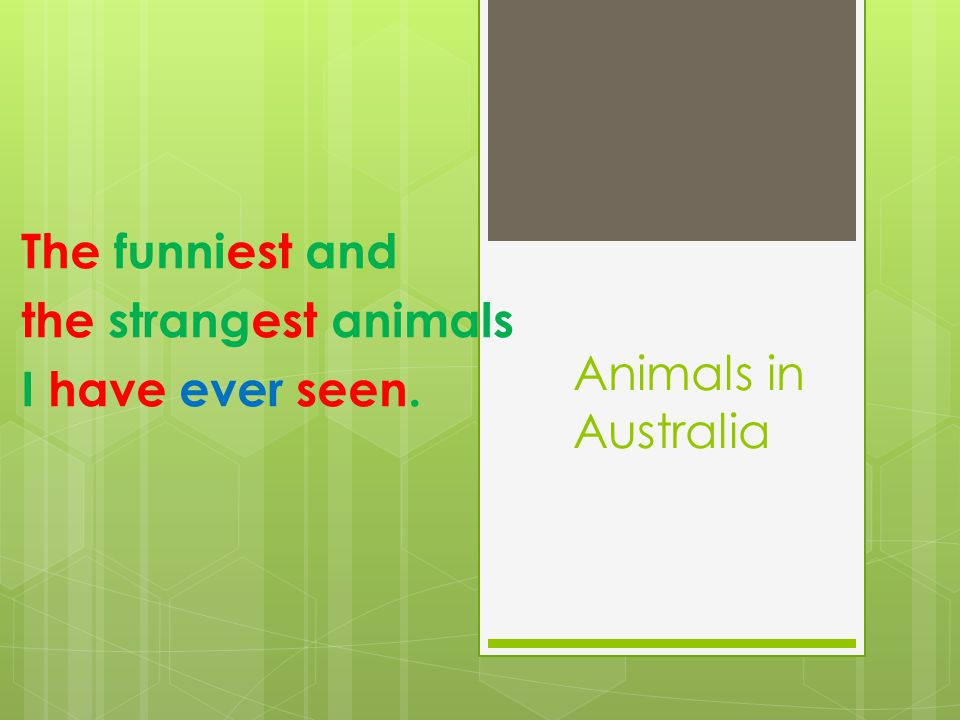Animals in Australia The funniest and the strangest animals I have ever seen.