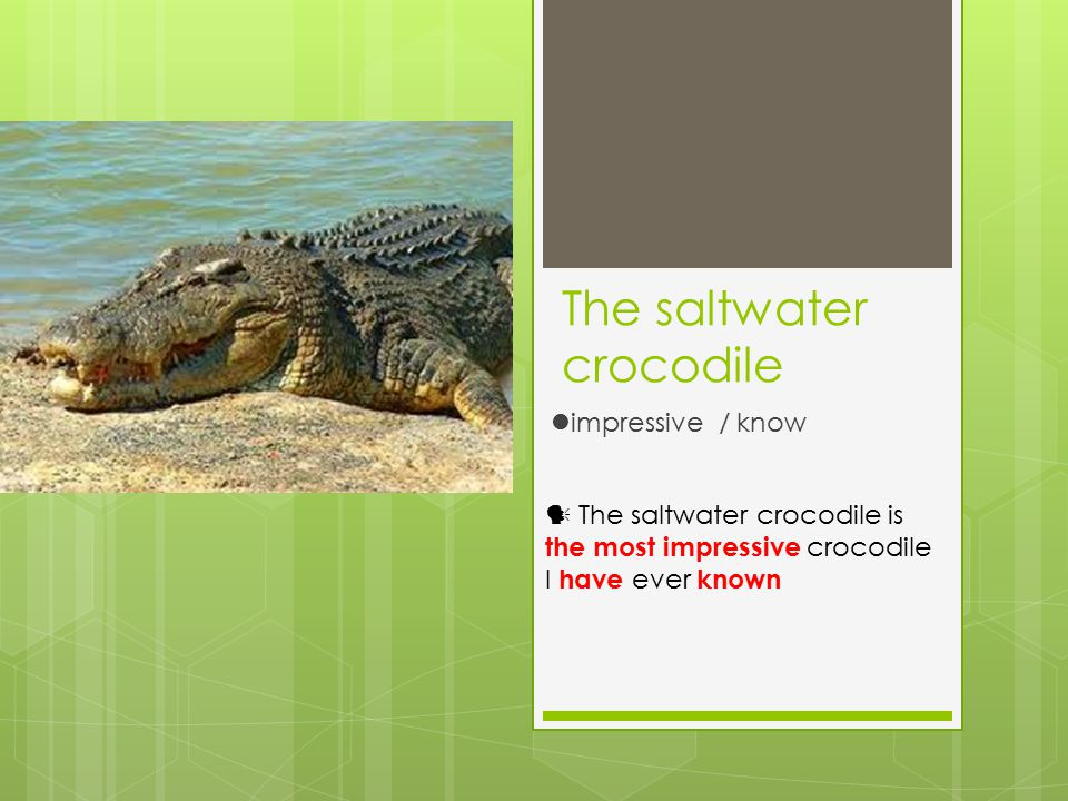 The saltwater crocodile impressive / know The saltwater crocodile is the most impressive crocodile I have ever known