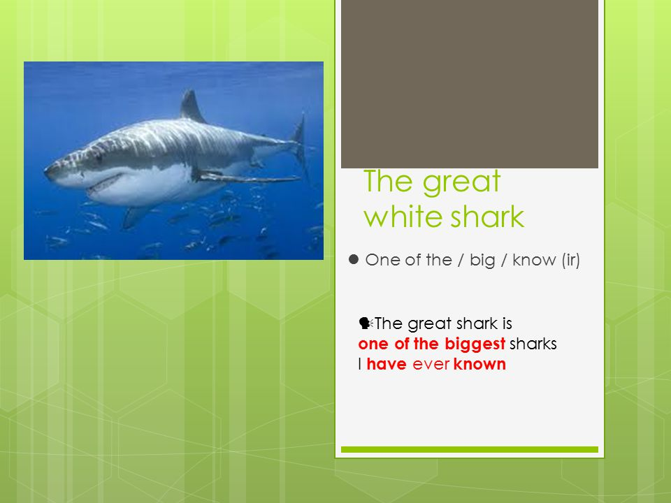The great white shark One of the / big / know (ir) The great shark is one of the biggest sharks I have ever known