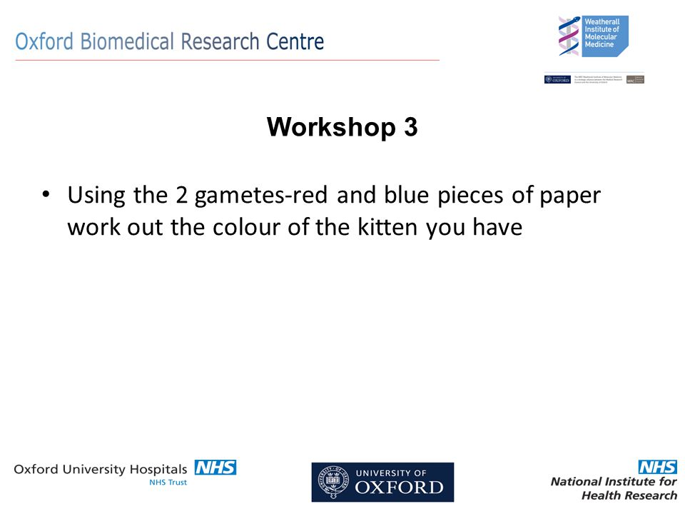 Workshop 3 Using the 2 gametes-red and blue pieces of paper work out the colour of the kitten you have