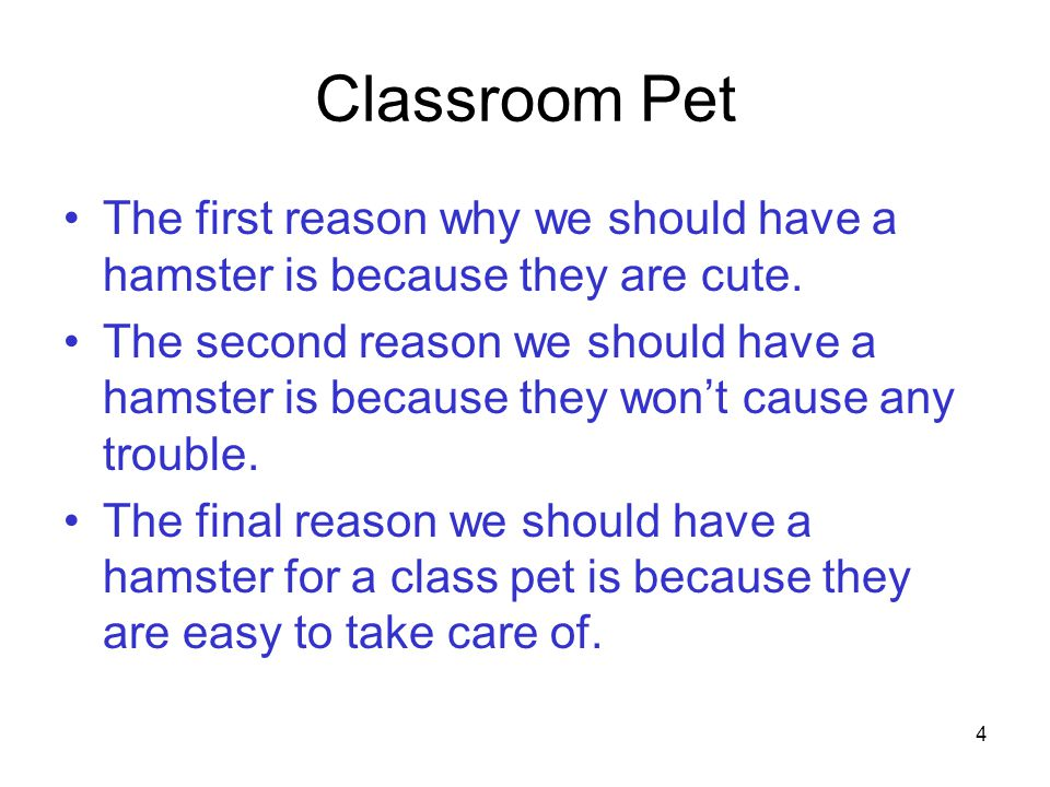 4 Classroom Pet The first reason why we should have a hamster is because they are cute.