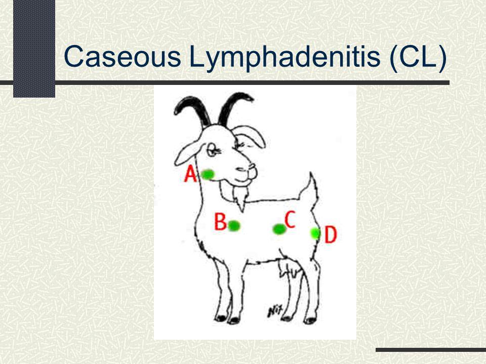Caseous Lymphadenitis (CL)